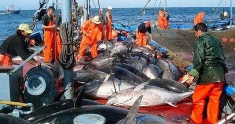الجزائر تصطاد حصتها الكاملة من التونة الحمراء